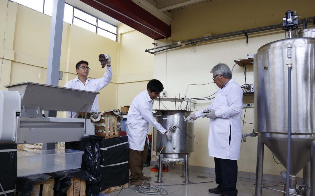 UNI: Construyen prototipo que optimiza la cantidad de uva en la producción de pisco