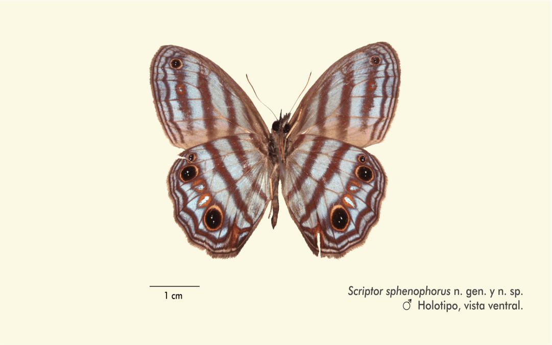 Investigador sanmarquino descubre nuevo género y especie de mariposas en la cuenca del Amazonas