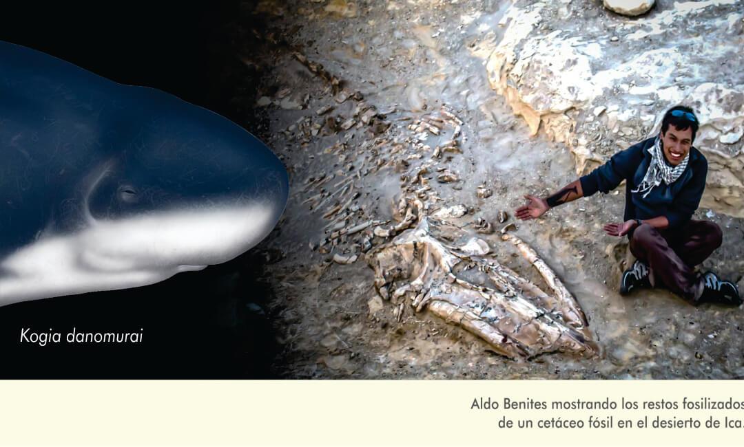 Sanmarquinos hallan fósil de cachalote enano más antiguo del mundo