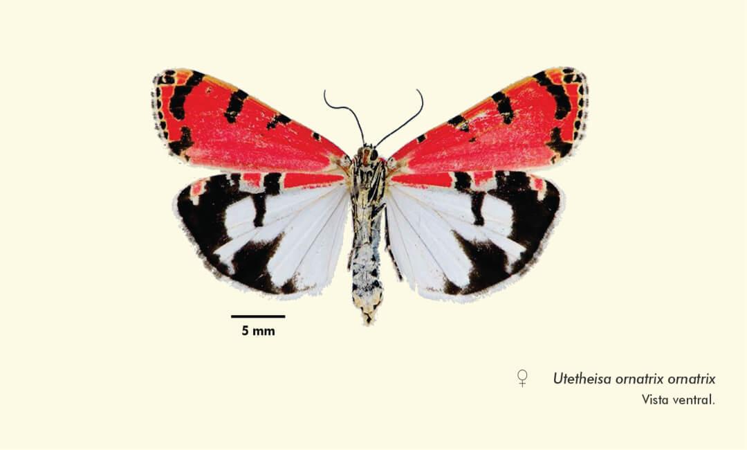 Entomólogo del MHN de la UNMSM registra nuevas especies de polillas en Arequipa