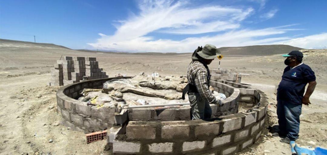 Proyecto científico de la UPCH busca impulsar el turismo paleontológico en Arequipa