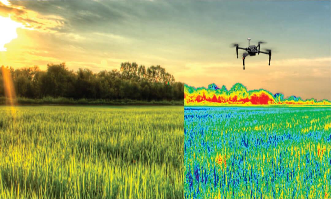 La UNALM en proyecto sobre uso de drones y satélites en el cultivo de arroz