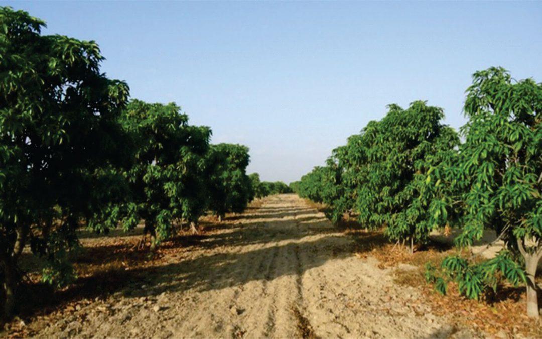 Investigadores sanmarquinos desarrollan vidrios solubles como fertilizantes para zonas agrícolas costeras