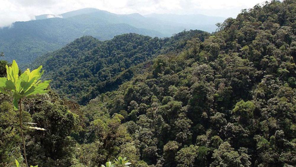 La UNALM busca mejorar la productividad de plantaciones forestales en la Amazonía