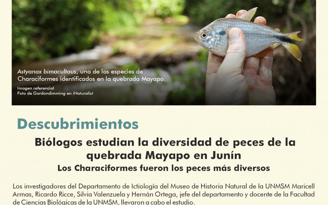 Biólogos sanmarquinos estudian la diversidad de peces de la Amazonía peruana